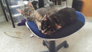 2 ADORABLE KITTENS NEED A HOME