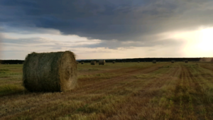 Greenfeed hay for sale