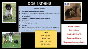 Dog wash kijiji in ontario buy sell save with canadas 1 dirty stinky oily roll in something solutioingenieria Gallery