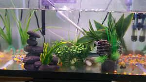 Fish tank with everything and 2 fish
