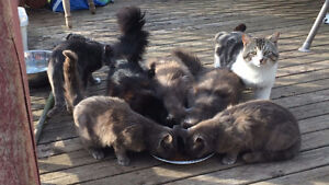 NS SPCA Spay Neuter services for unowned wild cats