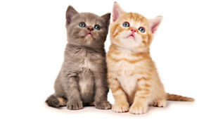 *** HOME BOARDING of Small Animals - 15 % off Spring Special ***