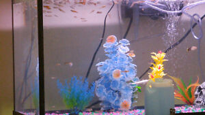 30 gallon with guppies.