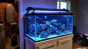 120 gallon complete saltwater reef tank setup