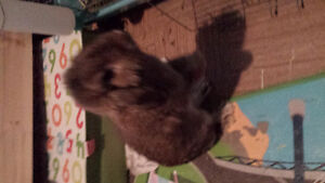 Sweet bunny for sale