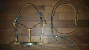 Show Halter and Lead