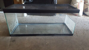 Turtle tank for young turtles + all accessories