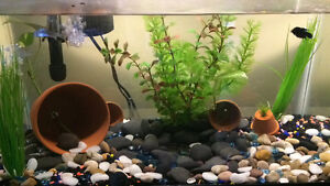Selling my 30gal tank everything included