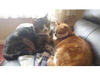 *****MISSING CAT **** Ginger & white