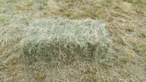 Hay for Sale - Excellent Quality Horse Hay