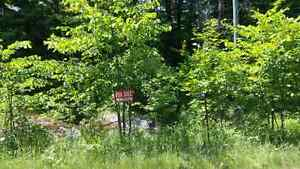 7.5 acre building lot in Muskoka( will take part trade)