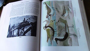 Birds of America, 1917, 1936, 106 Full Color Plates Kitchener / Waterloo Kitchener Area image 4