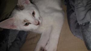 Male kitten need home