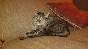 Free female tabby cat to loving home/Hay River NT