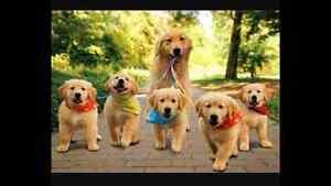 Dog Walker, Dog Sitter, House Sitter by professional dog bather