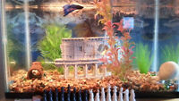 10 gallon aquarium fully equipped with 1 blue Betta Fish to sale