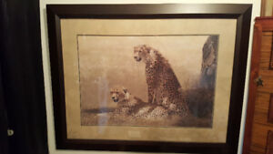 Framed Picture of Cheetahs