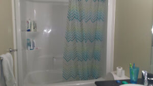 334 KING - 1/5 ROOMS IN ALL-FEMALE SUITE (WINTER 2017 SUBLET) Kitchener / Waterloo Kitchener Area image 3