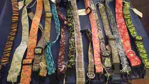 Needs to go! Dog accessories ; collars, leashes and brushes Kitchener / Waterloo Kitchener Area image 1