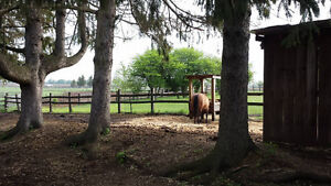 Outdoor spot in grass-less paddock available