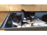 Cute kittens for sale to a good home
