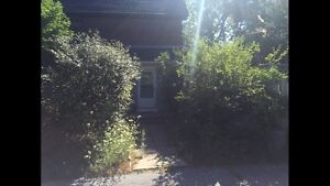 Spring lawn care / cutting and Spring cleanup Kingston Kingston Area image 5