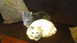 FREE TO GOOD HOME 2 DECLAWED CATS 7 AND  8  YRS OLD
