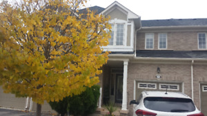 Rent - Bronte Creek - shared accommodation