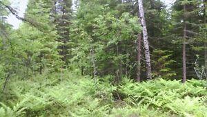terrain de villégiature Lac-Saint-Jean Saguenay-Lac-Saint-Jean image 4