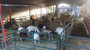Barnyard Parties with Little Tracks Petting Zoo