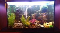 Aquarium 65 galon avec poisson et meuble tv