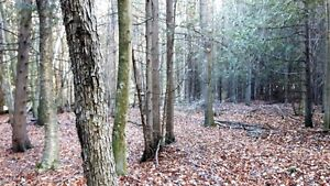 FANTASTIC 47 ACRE PARCEL ON THE EDGE OF TOWN Kitchener / Waterloo Kitchener Area image 10