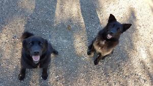 Missing Dogs Moosomin Area