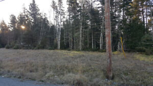 Lot Clearing - Lot Thinning - Tree Cutting