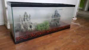 Aquarium 50 gallons  120$ nego