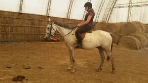fancy  and started under saddle with a rider