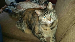 Missing female cat, Riverview.