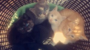 Kitties for sale