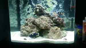 Saltwater  biocube for sale
