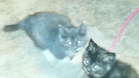 5 cute kittens looking for great homes