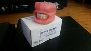 Dental Hygiene Practise Model Mouth