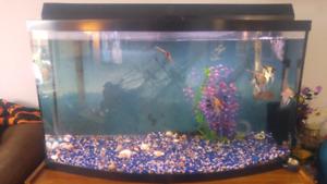 49 gallon fish tank aquarium 500 obo