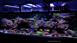 *Want to save thousands on fish & coral?