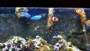 50 gallon salt water fish tank with fish