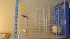 Budgies need a new home.