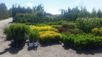 Sale on now at Calgary Plants - Save up to 50%!!