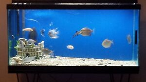 90 GALLON TALL TANK.....PRICED TO SELL!! Stratford Kitchener Area image 1