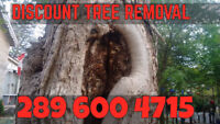 Tree removal I can beat any written estimate by $150 or more.