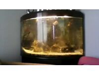 190 litre corner fish tank (full set up )