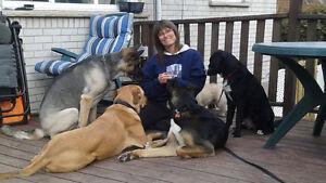 Pension familiale pour chiens sans cage